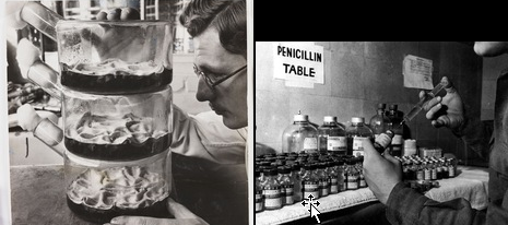 penicillin derived from herbs