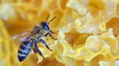 Royal Jelly and Modern Science